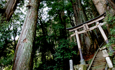 Information about Kumano Kodo